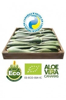 5 Kg of Organic Aloe Vera Leaves 12 years