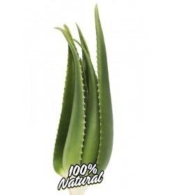 Planta Aloe Vera Viva Penca Zabila 2/3 años