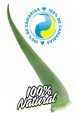 Aloe Vera Fresh Leaf 7-10 years